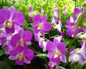 orquideas-bb16f9