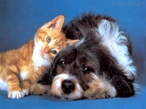 cachorro-e-gato1
